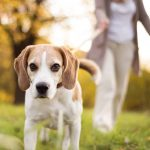 Why It Is Important to Walk Your Dog and How to Do It for Maximum Benefit