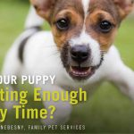 IS YOUR PUPPY GETTING ENOUGH PLAY TIME?